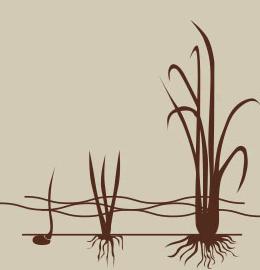 ciclo_02_cultivo_inundado